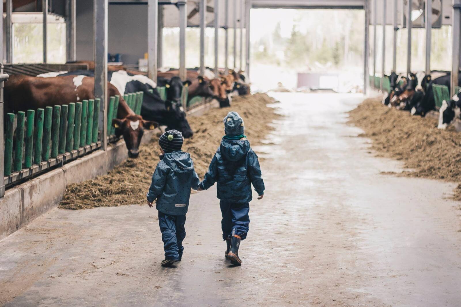 Lapsed Nopri Talu Meiereis