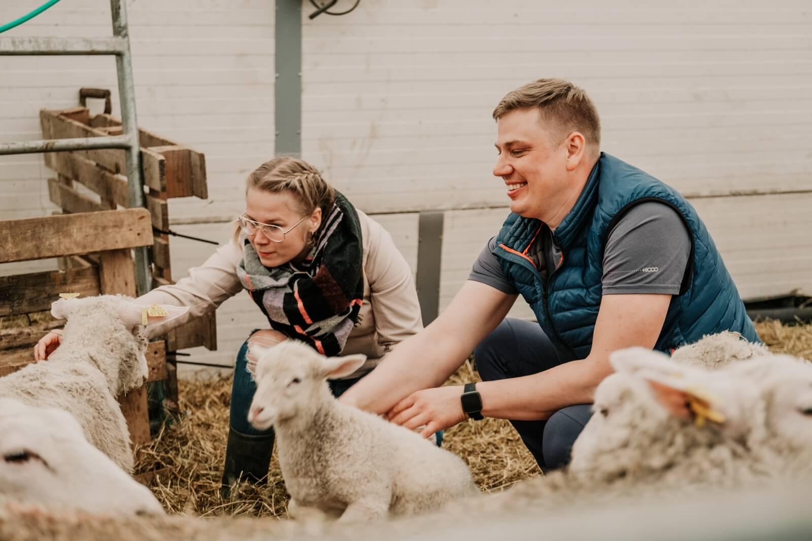 Laulja Alen Veziko tutvustamas lambaid
